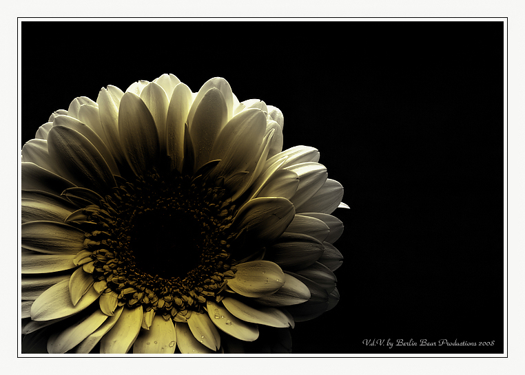 -Life is a flower-