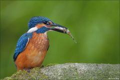 [ life of kingfishers~ 5 ]