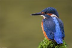 [ life of kingfishers~2 ]
