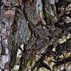 Lifes a bark