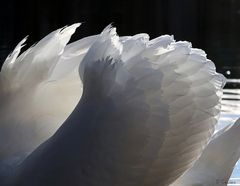 light as a feather.....