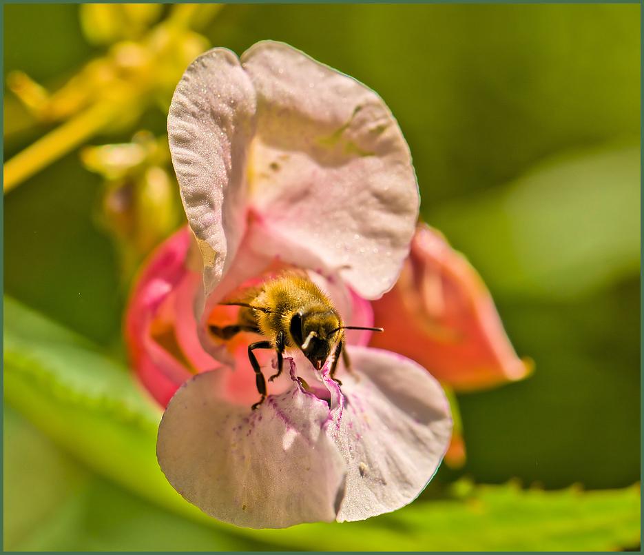 light bee .... von Gunter Redlin