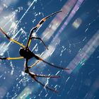 Light Games in a Web