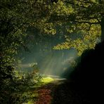 Light in the Forest (1)