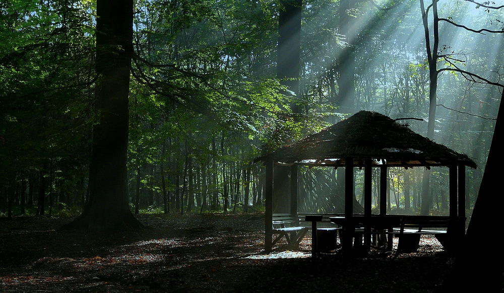 Light in the Forest (3)
