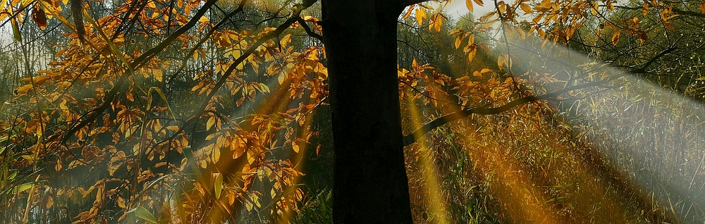 Light in the Forest (5)