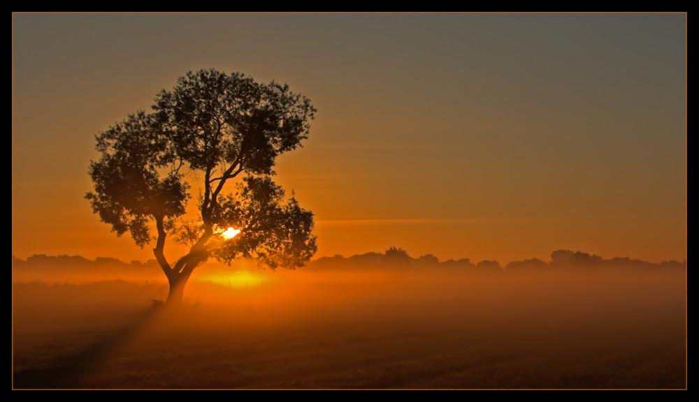 Light in the morning fog