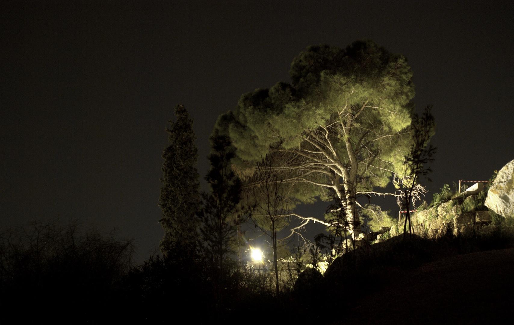Lightened tree