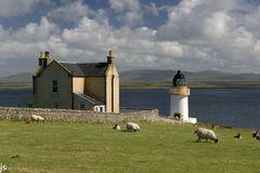 Lighthouse Sheep