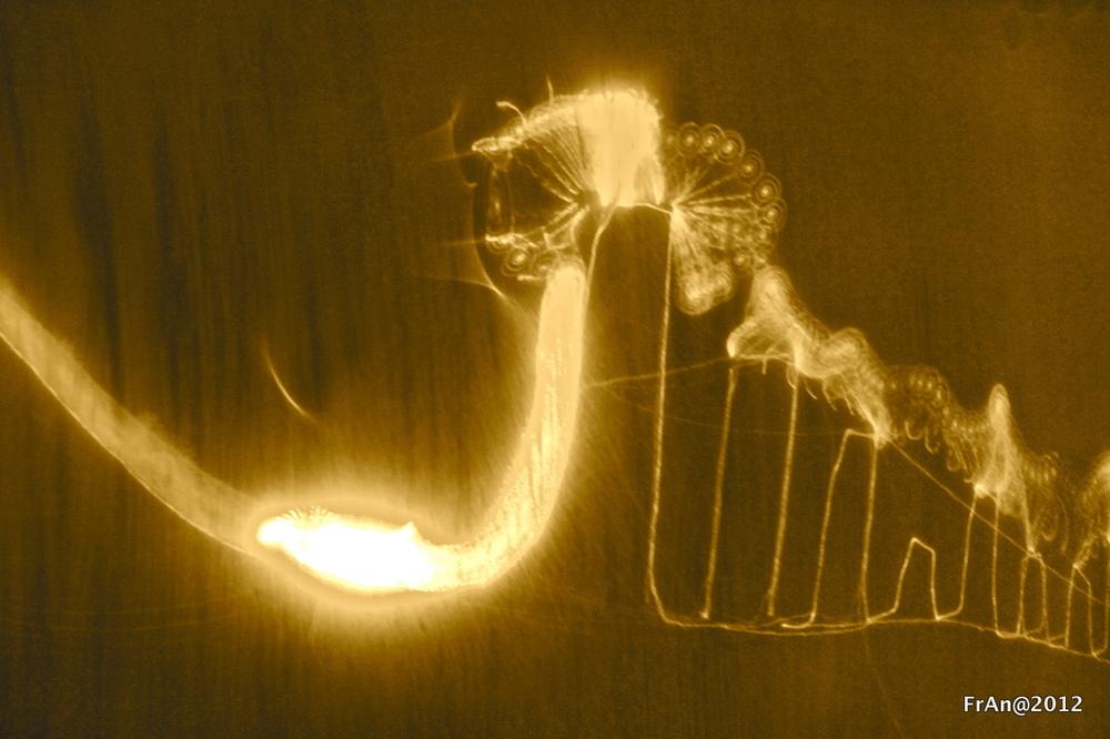 Lightworm