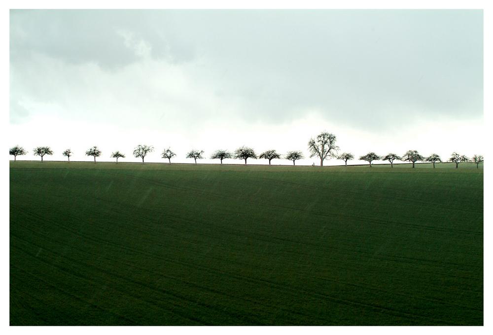 Ligne d'arbres sous la pluie