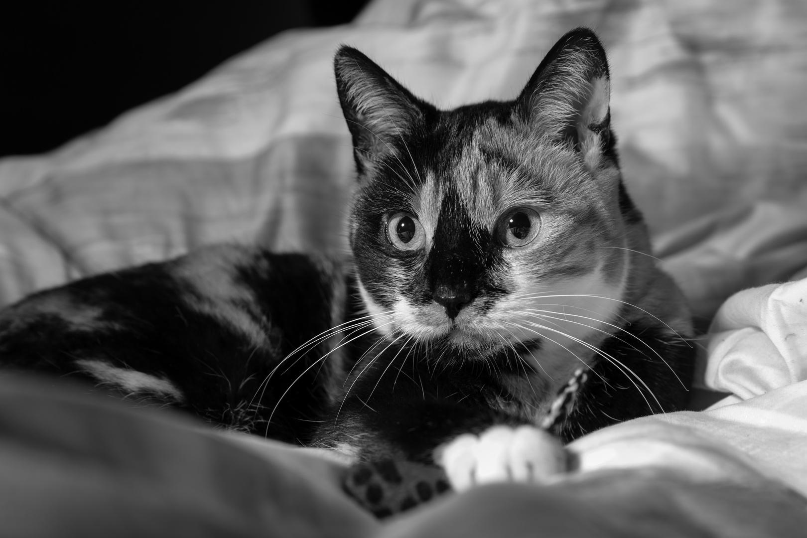 Lija - Aufgeweckter Schlafzimmerblick