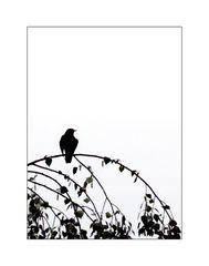 Like a Bird