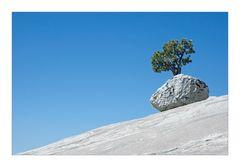 like a bonsai