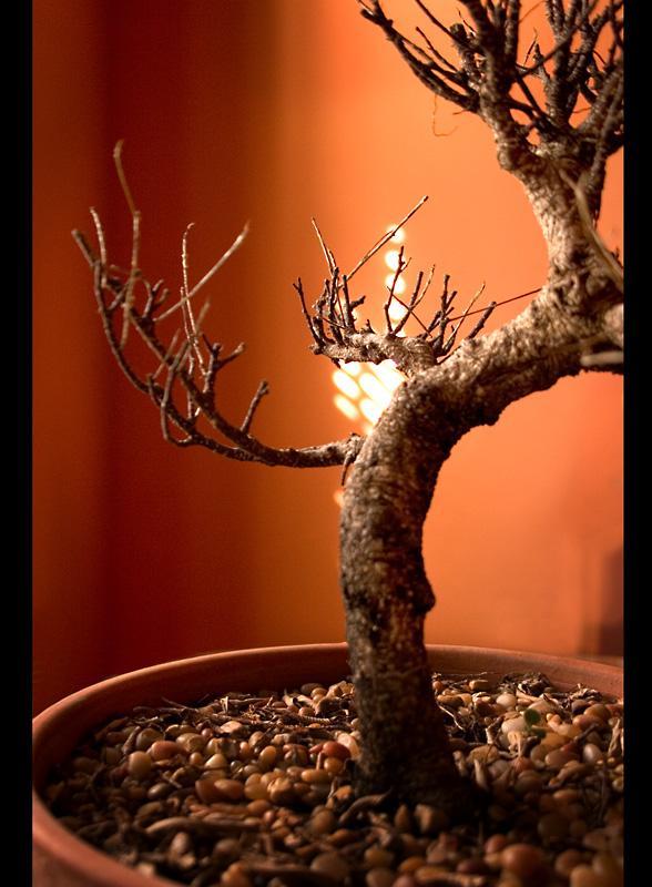 Lil tree