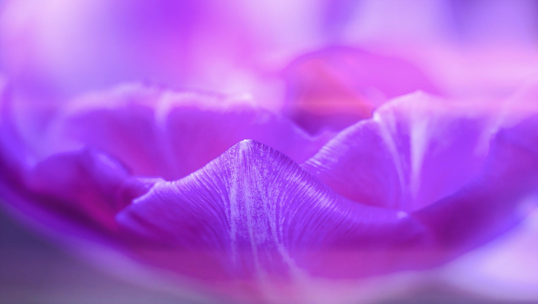 lila leuchtet es in unserem herzen ...