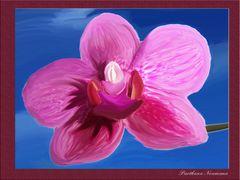 """ Lila Orchidee """