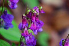 lila-violett-blau