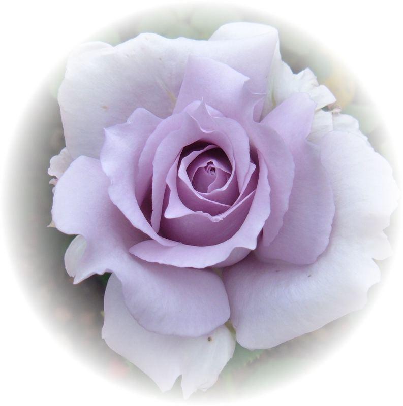 Lilac - Princess