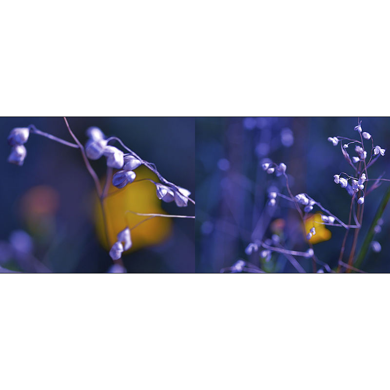 [ lila.gelb ]