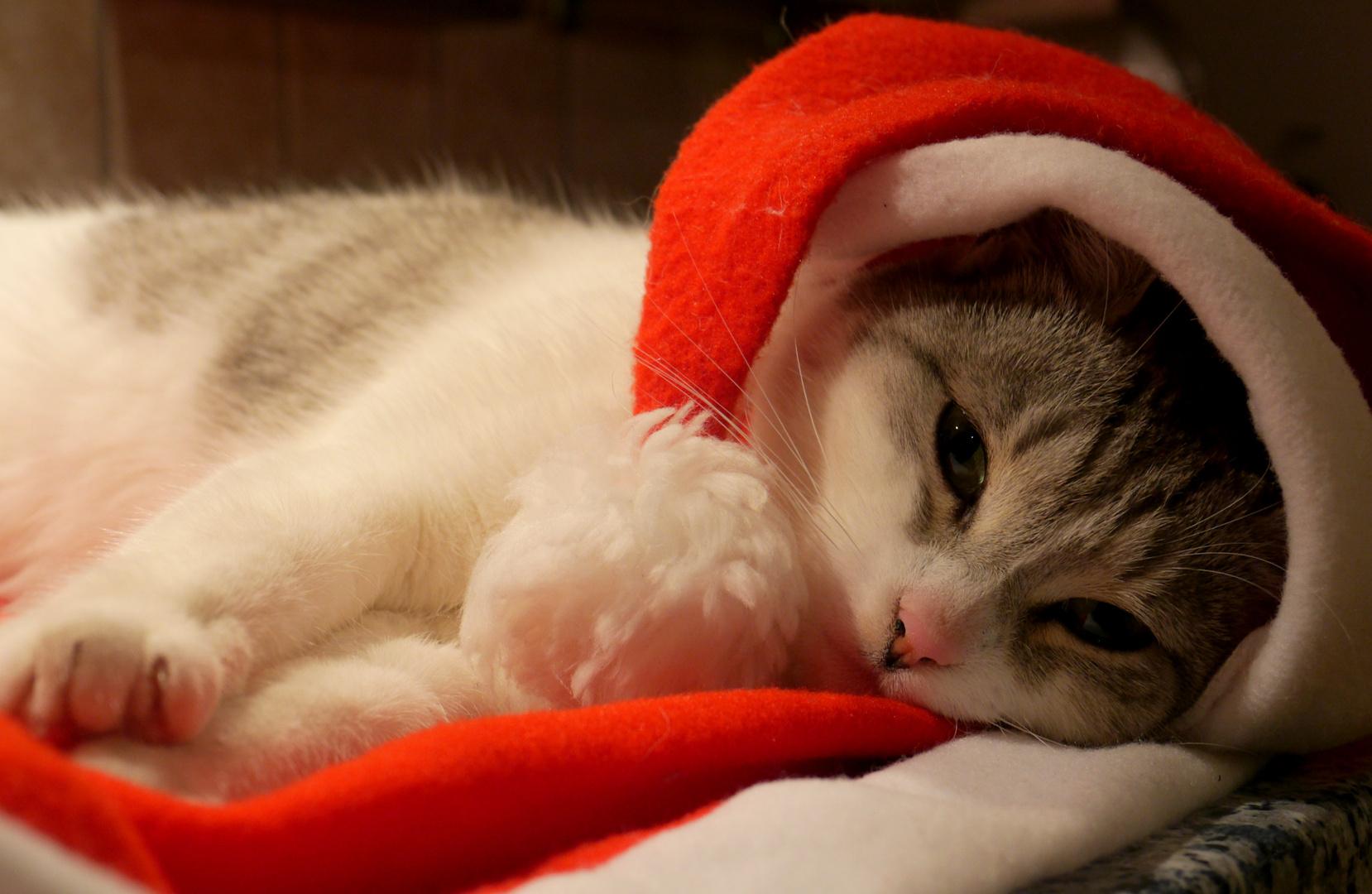 Lili in Weihnachtslaune