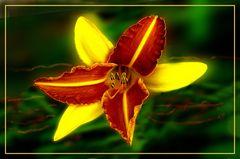 Lilie im Nachbargarten