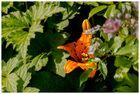 Lilie im Versteck
