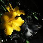 Lilie in einen besonderen Licht