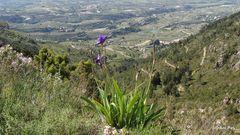 Lilie und mehr - Wanderung auf dem Benicadell - Spanien