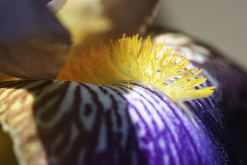 Lilien im Garten 2