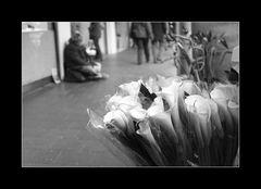 Lilien und... keine Lilien