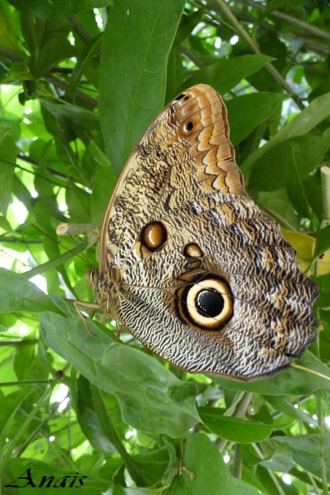 L'illusion du papillon