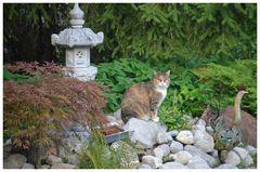 Lilly auf dem Steinbeet