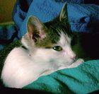 Lilly, die verrückteste Katze die ich kannte