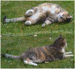 Lilly ganz entspannt