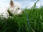 Lilly im Gras