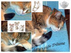 Lilly's süße Träume