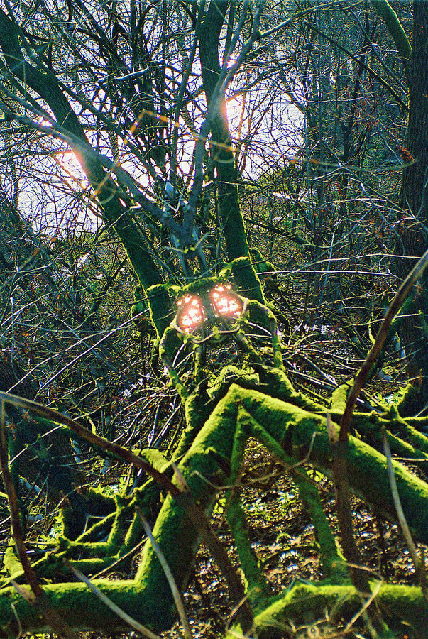 limbs green with light