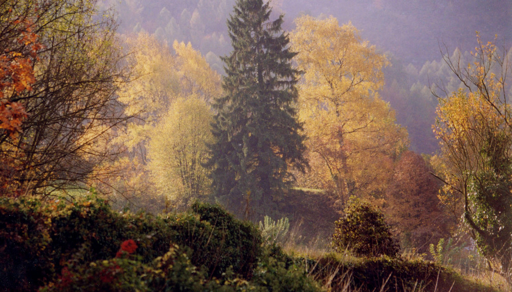 Limitare del bosco a Drena