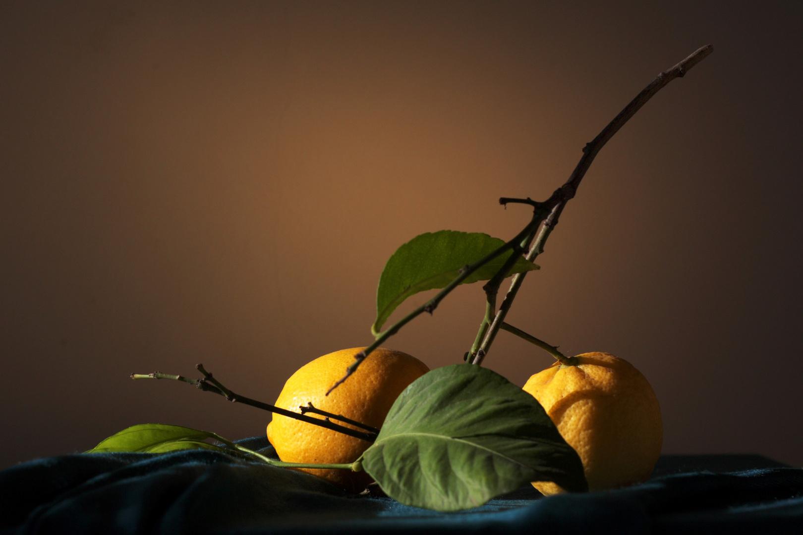 limón en rama