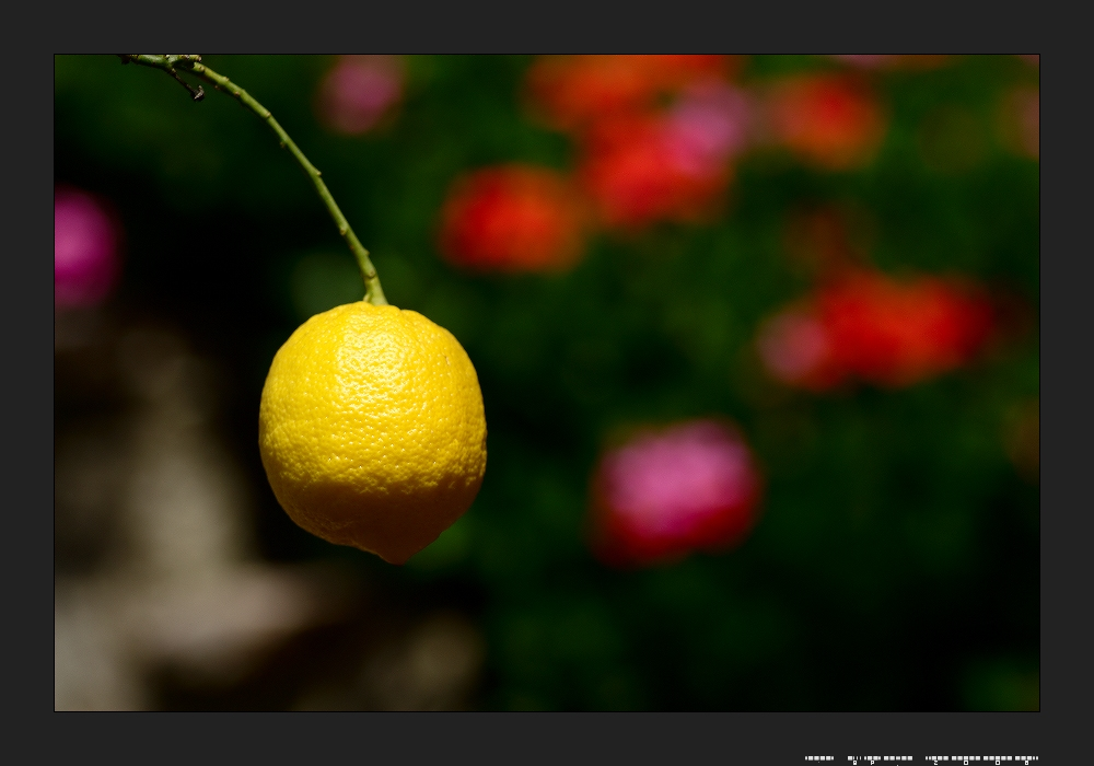 Limone in Limone