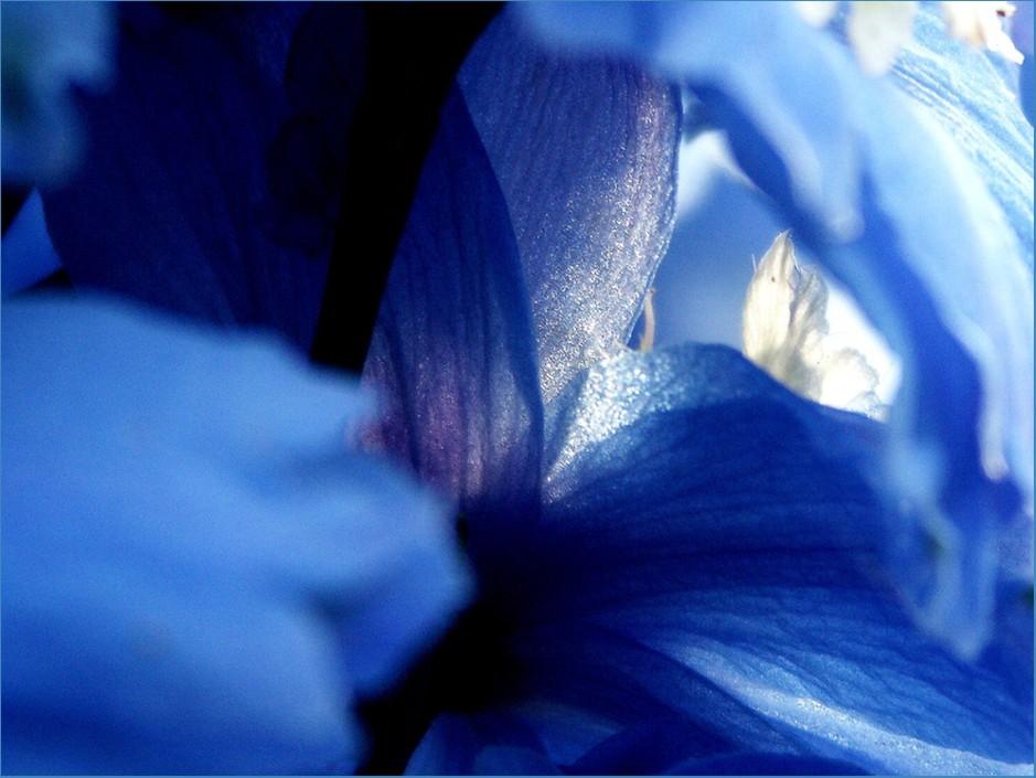 L'impression bleue