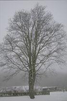 Linde im Nebel
