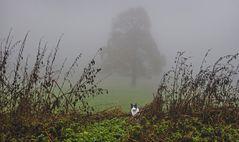 Linde im Nebel mit neugieriger Neujahrskatze!