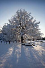 Linde Schnee Gegenlicht Schatten Bänke