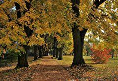 Lindenbäume im Herbstkleid