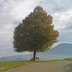 Lindenbaum im Herbstkleid
