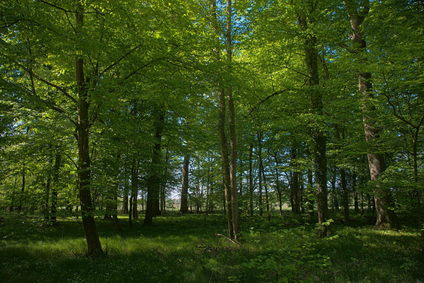 """""""Linearer"""" Wald"""