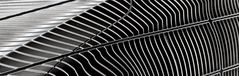 lines | curves