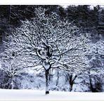 Lines & Snow (3)
